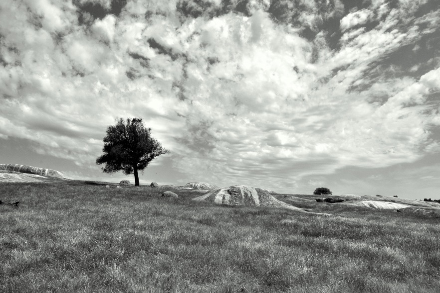 Dog Rocks by Lance Youston